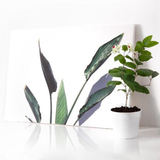 Impresión 60x90 sobre lienzo